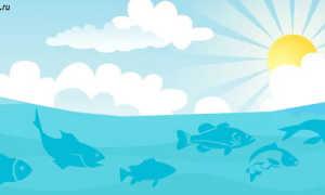 Какая рыба мечет икру зимой, что такое нерестовый период