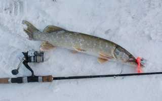Спиннинг для зимней рыбалки: как выбрать, особенности рыбалки